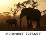 Large Elephant Matriarch And...