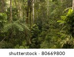 Rainforest Near Cairns ...