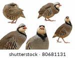 chukar  or chukar partridge on... | Shutterstock . vector #80681131