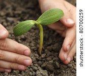 sprout in children hand | Shutterstock . vector #80700259