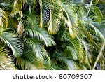 A Corner Of A Palm Tree With...