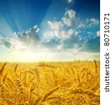 field with gold ears of wheat... | Shutterstock . vector #80710171