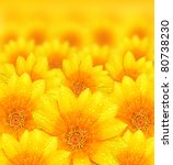 Stock photo fresh yellow flower background with dew props beautiful nature concept 80738230