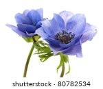 Flowers Of Anemone On A White...