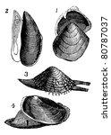 mollusc. 1.  nutlet  2. mold  3....   Shutterstock .eps vector #80787037