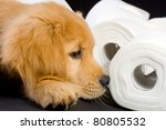 Golden Retriever Puppy laying on and in a pile of soft, fluffy toilet paper. - stock photo