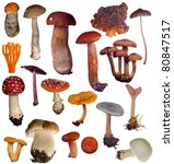 Large Mushrooms Collection...