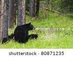 wild black bear family  mother... | Shutterstock . vector #80871235