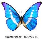 Butterfly Morpho Rhetenor...