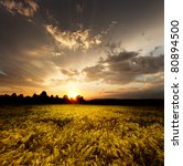 sunset and agricultural field | Shutterstock . vector #80894500