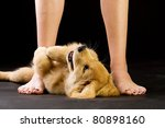 submissive puppy - stock photo