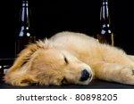 drunk dog - stock photo