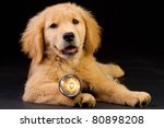puppy with flashlight - stock photo