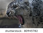 Snow Leopard With Its Mouth...