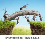 team work  ants constructing... | Shutterstock . vector #80955316