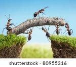 team work  ants constructing... | Shutterstock . vector #80955316