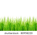 green grass isolated on white | Shutterstock . vector #80958220