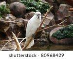 cockatoo | Shutterstock . vector #80968429