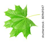 Green Maple Leaf Isolated On...