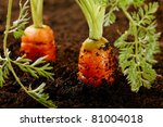 Carrots Growing In The Soil ...