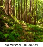 A lush, dreamlike, undisturbed Redwood forest with many ferns in Central California - stock photo