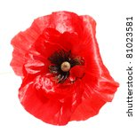 Red Poppy Isolated On White...