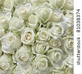 White Roses As A Square...