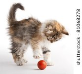 Stock photo kitten playing with red ball 81068278