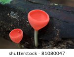 wineglass mushrooms - stock photo