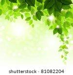 summer branch with fresh green... | Shutterstock .eps vector #81082204