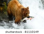 Alaska Brown Bear Is Catching ...