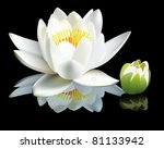 White Water Lily Flower And Bud ...