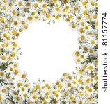 camomile floral frame | Shutterstock . vector #81157774