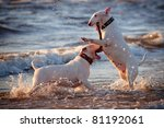 Two White English Bull Terrier...