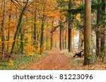 pathway in the autumn forest | Shutterstock . vector #81223096