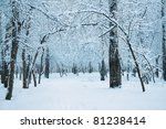 frozen forest covered with snow | Shutterstock . vector #81238414