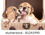 gentle kiss an english bulldog... | Shutterstock . vector #81241990