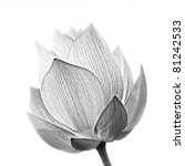 Lotus Flower In Black And Whit...