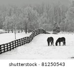 Horses In Snowy Rolling Meadow...