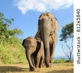 Stock photo asian elephant mother and baby thailand 81265840