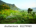 Rice Fields In A Valley At...