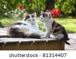 Stock photo small cute kitten and his mother 81314407