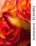 Beautiful Red Yellow Roses Macro