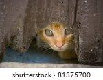 Kitten Looks Hidden Across The...