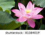 Close Up Lotus Blossom  ...