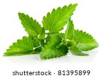 fresh green leaf of melissa... | Shutterstock . vector #81395899