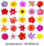 Stock photo a set of blooms in summer 81450412