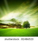 oak tree in a field at sunset | Shutterstock . vector #81486523