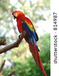colorful parrot | Shutterstock . vector #814987