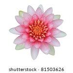 Pink Lotus  Water Lily ...